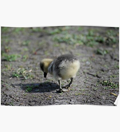 Hungry Duckling Poster