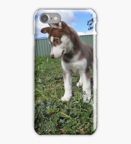 Jax-husky/malamute puppy iPhone Case/Skin