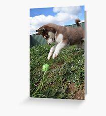 Jax-husky/malamute puppy playing  Greeting Card
