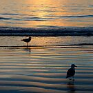 Seagulls @ Sunset by Tom Deters