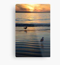Seagulls @ Sunset Metal Print