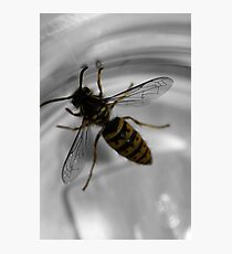 Busy busy bee ... Photographic Print