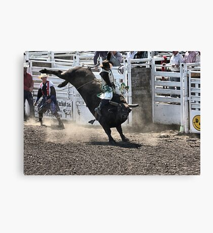 No Bull About It Canvas Print