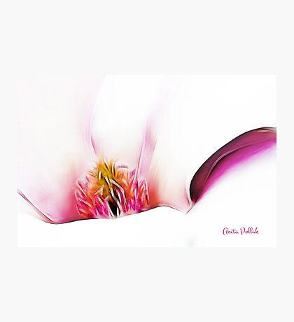 Abstract Magnolia Photographic Print