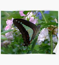 Blue Triangle Butterfly Poster