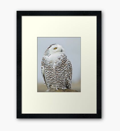 Early visitor Framed Print