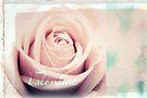 Valentine Rose by Vanessa Barklay