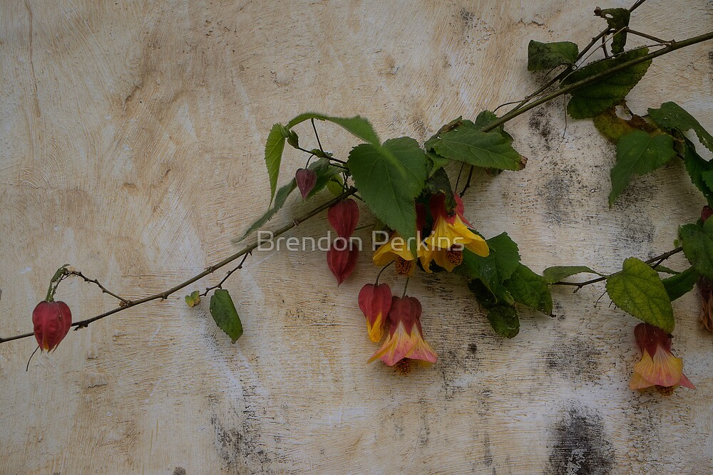 Mission Flowers by Brendon Perkins