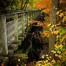 Virginia Creeper Trail Bridge at Abingdon by Cecilia Carr
