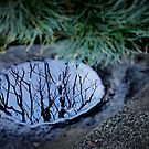 Winter Reflections 1 by Ellen Cotton