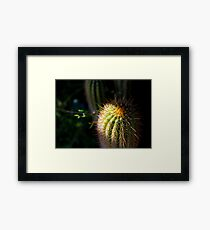 Prickly Framed Print