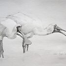 Royal Spoonbills scolding by ColinWilliams