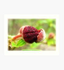 Red Seeds Art Print