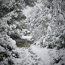 Winter mediterranean wonderland. by Tigersoul