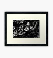 Monochrome Urchins Framed Print