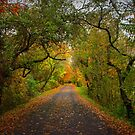 Virginia Creeper Trail, Fall by Cecilia Carr
