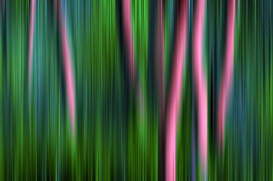 Jade Enchantment by John  De Bord Photography