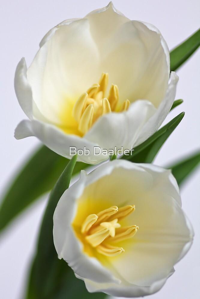 Fresh Tulips... a little later... by Bob Daalder