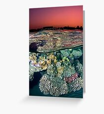 Sunset at the Red Sea Reef Greeting Card