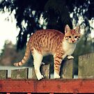 I am a mighty Fence climber!! by Angie O'Connor