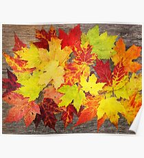 Layered In Leaves Poster