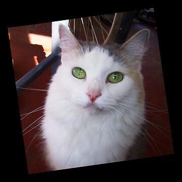 Green Eyes by CricketNoel