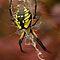 ITEM CHALLENGE # 1 SPIDERS