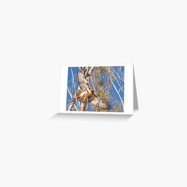 020412 Red Tailed Hawk Greeting Card