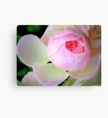 Baby of a rose Metal Print