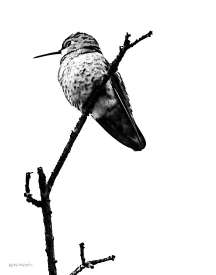 Another Little Bird (image & poetry) by Rhonda Strickland