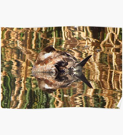 Ruddy Duck ~ Reflection Dreams Poster