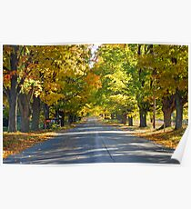 Northern Michigan Fall Trees Poster