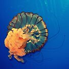 jelly by Jamie McCall