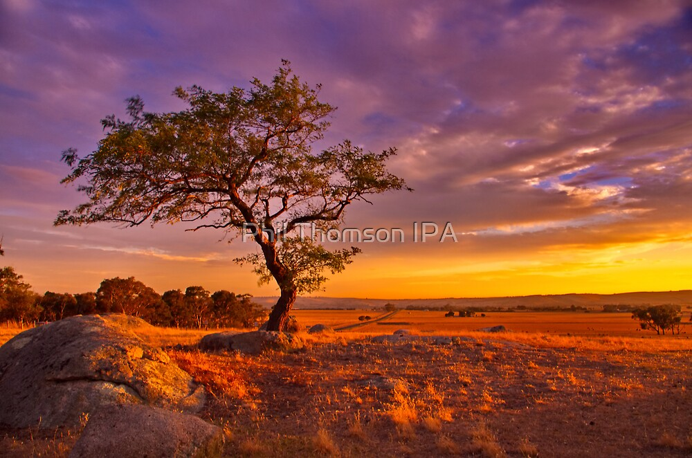 """Day's End At The Rocks"" by Phil Thomson IPA"