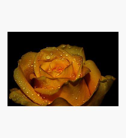Drops of Love Photographic Print