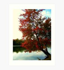 Beautiful Tree Growing out of the North Cove, Wayne NJ Art Print