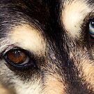 His Eyes by Josie Eldred