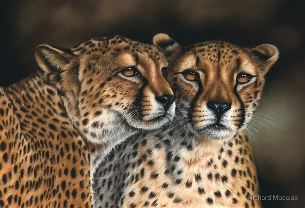 Wildlife Artwork of Two Cheetahs by Richard Macwee