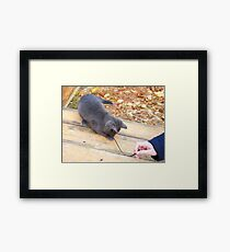 Homeless kitten playing with a stick Framed Print