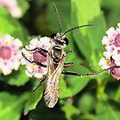 Yukky Wasp  by Toni Kane
