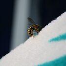 «Wasp» de VoodooChild68