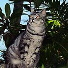 My Beautiful Mia......Missing Princess Kendra Dearly. by Toni Kane