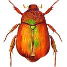 Iridescent Dune Chafer Beetle by EJ Landsman