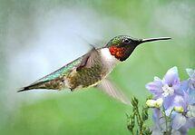 Hummingbird & Lavender Lapspar by Kathy Baccari