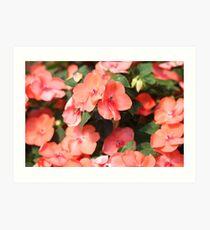 Peach Colored Flowers Art Print