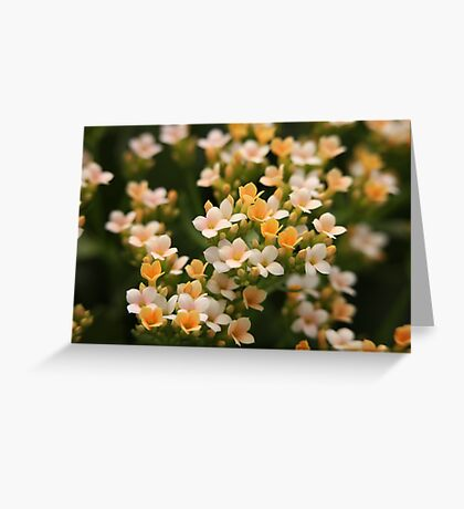 Yellow and White Flowers Greeting Card