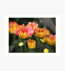 Yellow and Pink Flower Scene 7091 Art Print