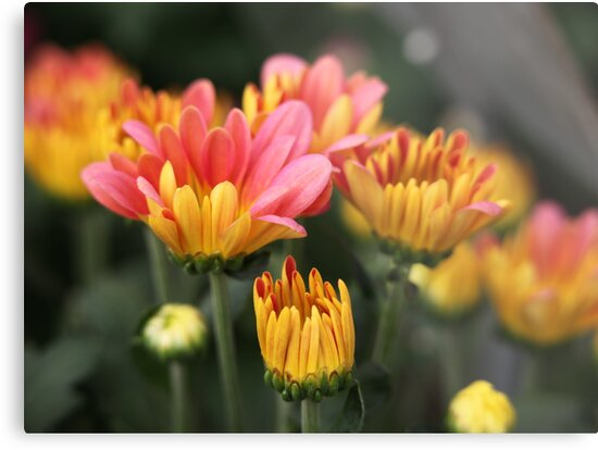 Yellow and Pink Flower Scene 7091 by Thomas Murphy