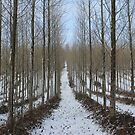 The Snow Trail by David White