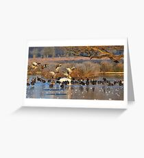 Duck Attack! Greeting Card